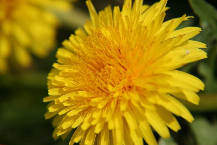 小さい春み~つけた_c0120834_102014.jpg
