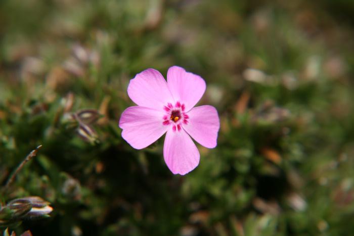 小さい春み~つけた_c0120834_1035765.jpg