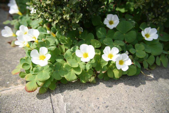 小さい春み~つけた_c0120834_104143.jpg
