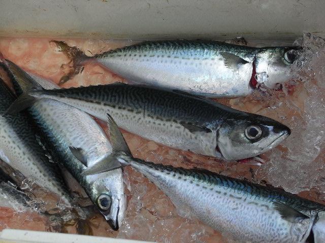 3月17日(月) This is ザ・遠洋漁業_d0082944_13552471.jpg