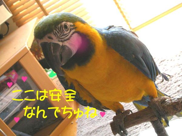 f0132055_9492830.jpg