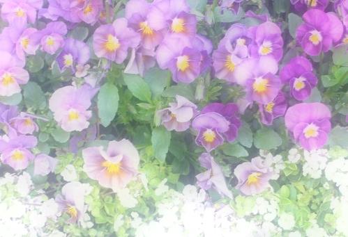 春のお彼岸。:☆.。† _a0053662_1482893.jpg