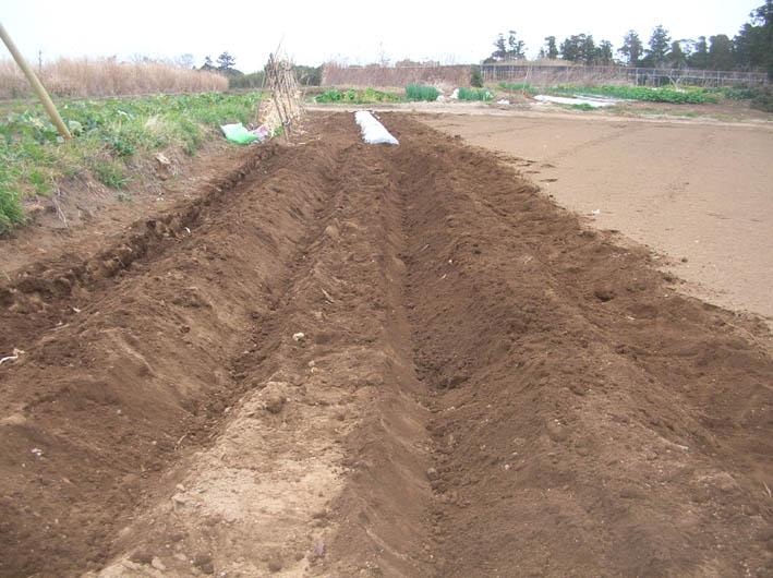 遂に故郷の実家の畑にエビイモとヤツガシラを植えた!_c0014967_1417075.jpg