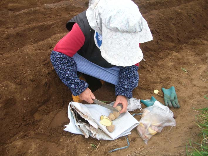 遂に故郷の実家の畑にエビイモとヤツガシラを植えた!_c0014967_1545374.jpg