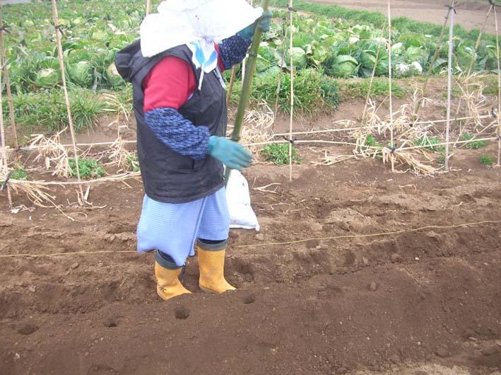 遂に故郷の実家の畑にエビイモとヤツガシラを植えた!_c0014967_1551916.jpg