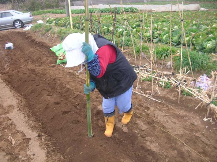 遂に故郷の実家の畑にエビイモとヤツガシラを植えた!_c0014967_155511.jpg