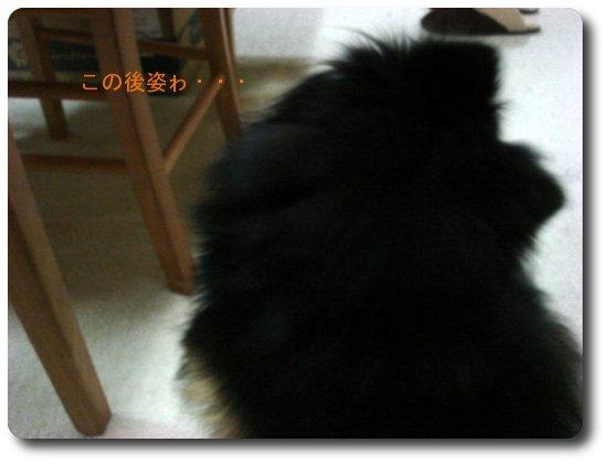 b0078073_1454826.jpg