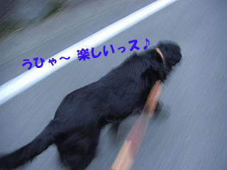 d0043478_0291237.jpg