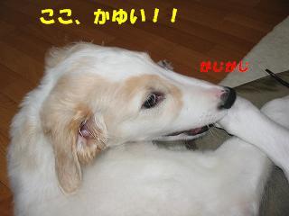 b0124595_22224114.jpg