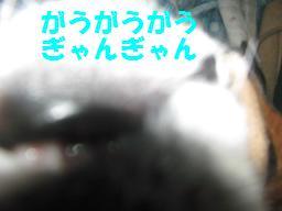 d0104209_2026299.jpg