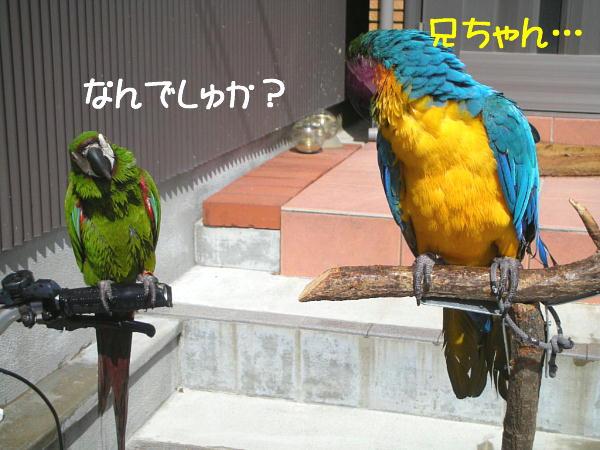 f0132055_933525.jpg