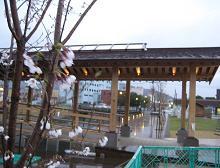 春雨_f0138874_9512350.jpg
