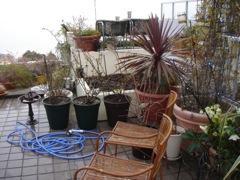 2008年3月18日 Spring has come!         _b0098584_0205136.jpg