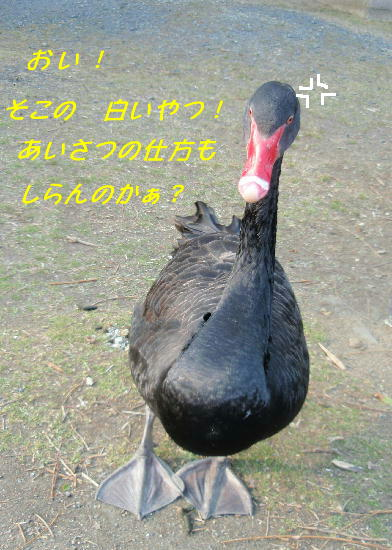 c0075585_0281570.jpg