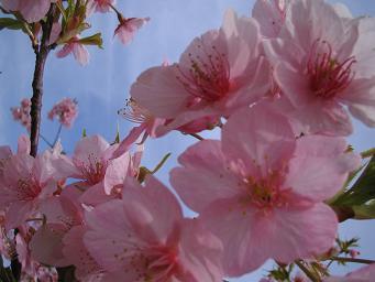 春が来た_d0092605_13373697.jpg