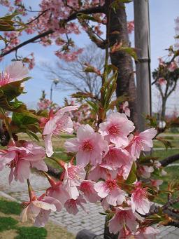 春が来た_d0092605_13393320.jpg