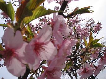 春が来た_d0092605_1339716.jpg