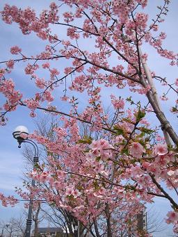 春が来た_d0092605_13432565.jpg