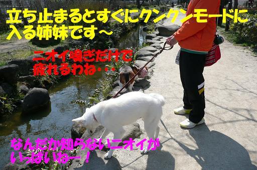f0121712_22264099.jpg