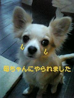 f0148927_18275765.jpg