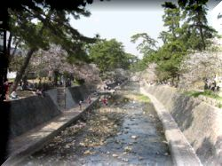 京阪神の桜ポイント_a0084343_117590.jpg