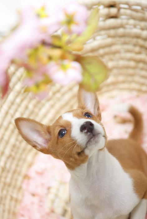 春がやってくる_d0101050_2059299.jpg