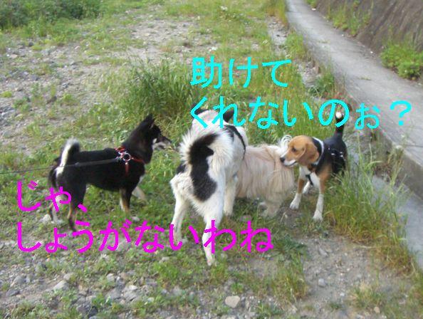 f0053952_2053947.jpg