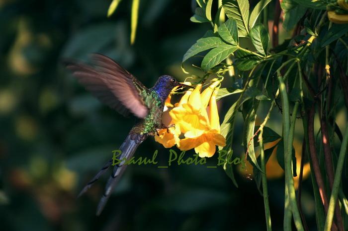 花にくちづけをする鳥_e0110461_6132766.jpg