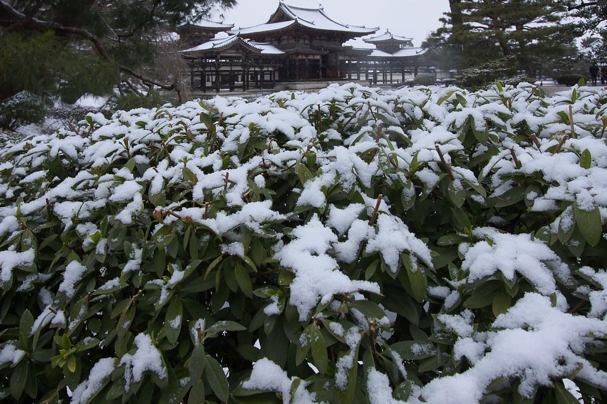 京都 雪景色 <宇治> 1 _f0021869_20194629.jpg