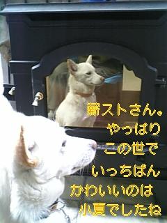 小夏の答え_f0148927_18284625.jpg