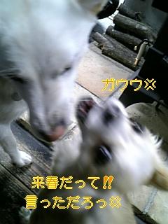 小夏の答え_f0148927_18295494.jpg