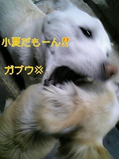 小夏の答え_f0148927_18304174.jpg
