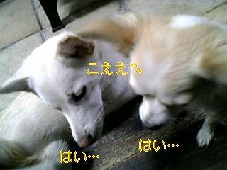 小夏の答え_f0148927_18322878.jpg