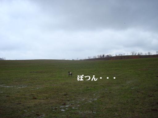 f0141130_1341052.jpg