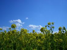 春です!! by kyon_f0053343_20122199.jpg
