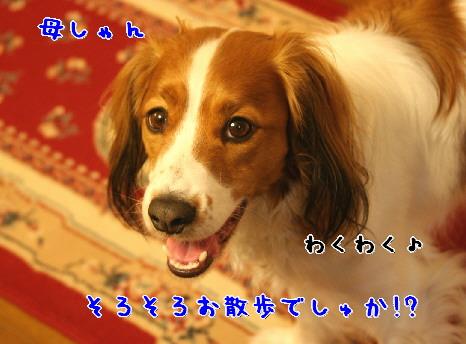 d0013149_10545971.jpg