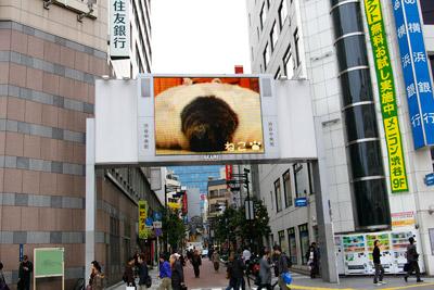 ヨウカンさん、渋谷デビュー!【3/24動画追加しました】_a0028451_16101875.jpg