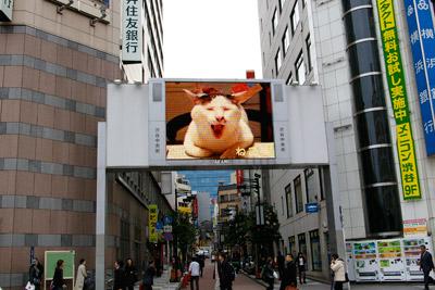ヨウカンさん、渋谷デビュー!【3/24動画追加しました】_a0028451_1610793.jpg