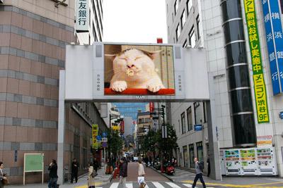 ヨウカンさん、渋谷デビュー!【3/24動画追加しました】_a0028451_1695738.jpg