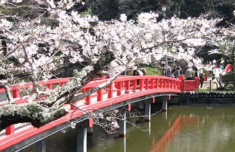 茂原桜まつり_b0114798_15235394.jpg