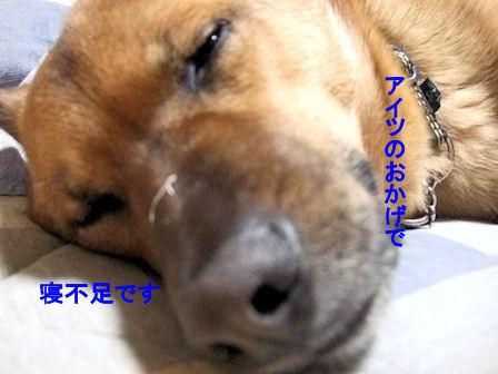 b0087400_018059.jpg