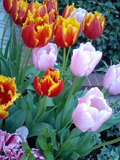 春だね~♪♪_c0038100_19402179.jpg