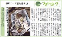 今週のフォトローグ「桜がつれてきた赤ん坊」 onリビング京都のご案内_c0069903_634945.jpg