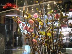 桜、開花宣言!_d0091909_151121.jpg