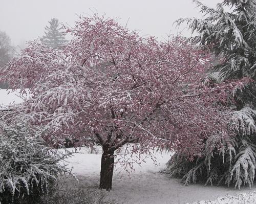 初雪_a0086828_19562418.jpg