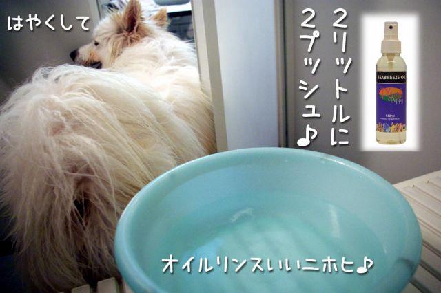 洗ったどー!_c0062832_1754333.jpg