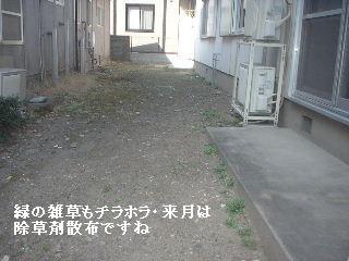 f0031037_1518828.jpg