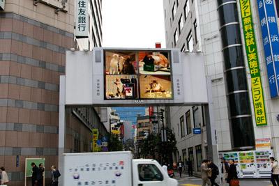 ヨウカンさん、渋谷デビュー!【3/24動画追加しました】_a0028451_10151512.jpg