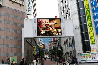 ヨウカンさん、渋谷デビュー!【3/24動画追加しました】_a0028451_10153175.jpg