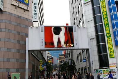 ヨウカンさん、渋谷デビュー!【3/24動画追加しました】_a0028451_10154523.jpg